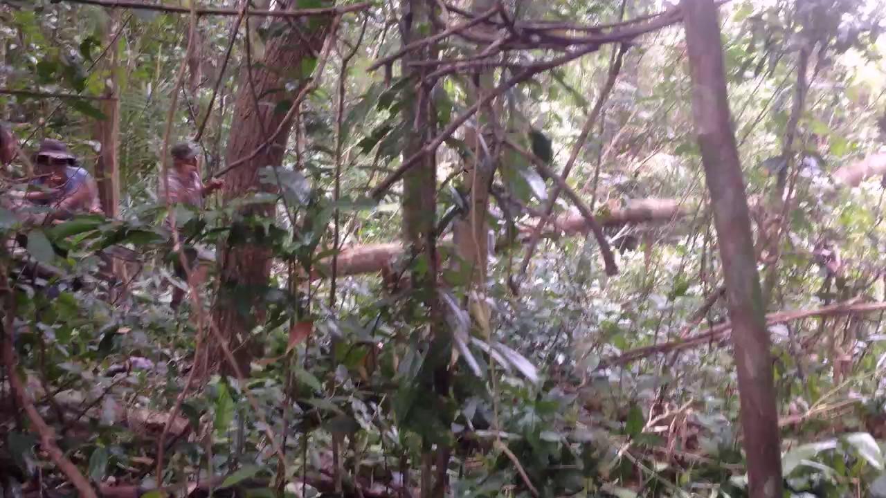 """Rừng ở Phú Yên """"chảy máu"""""""