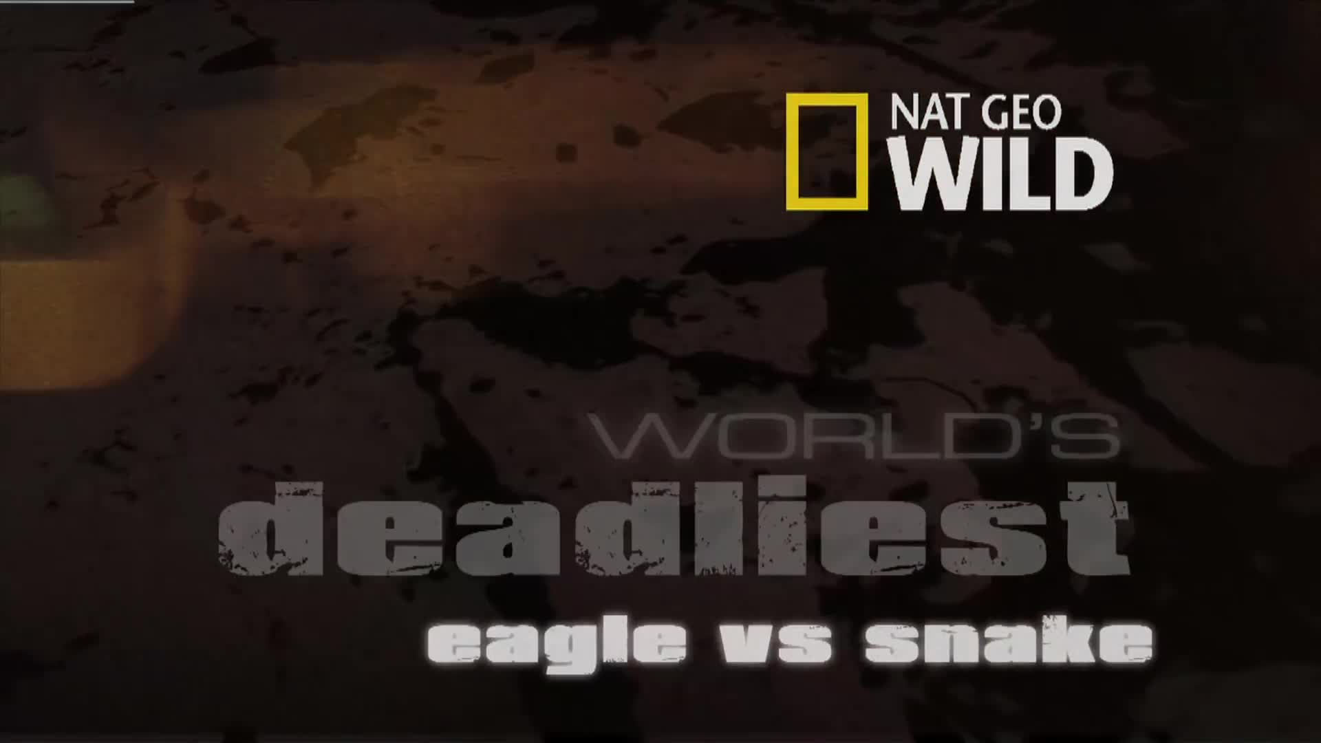 eagle vs. toxic snake - world's deadliest