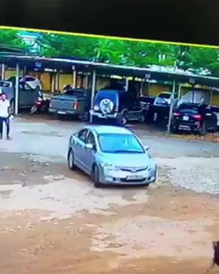 Ô tô cán phải chú chó thả rông trong bãi gửi xe