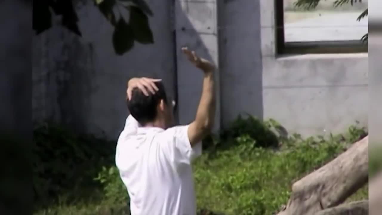 Người đàn ông nhảy vào chuồng sư tử với ý định điên rồ. Nguồn: Randoms