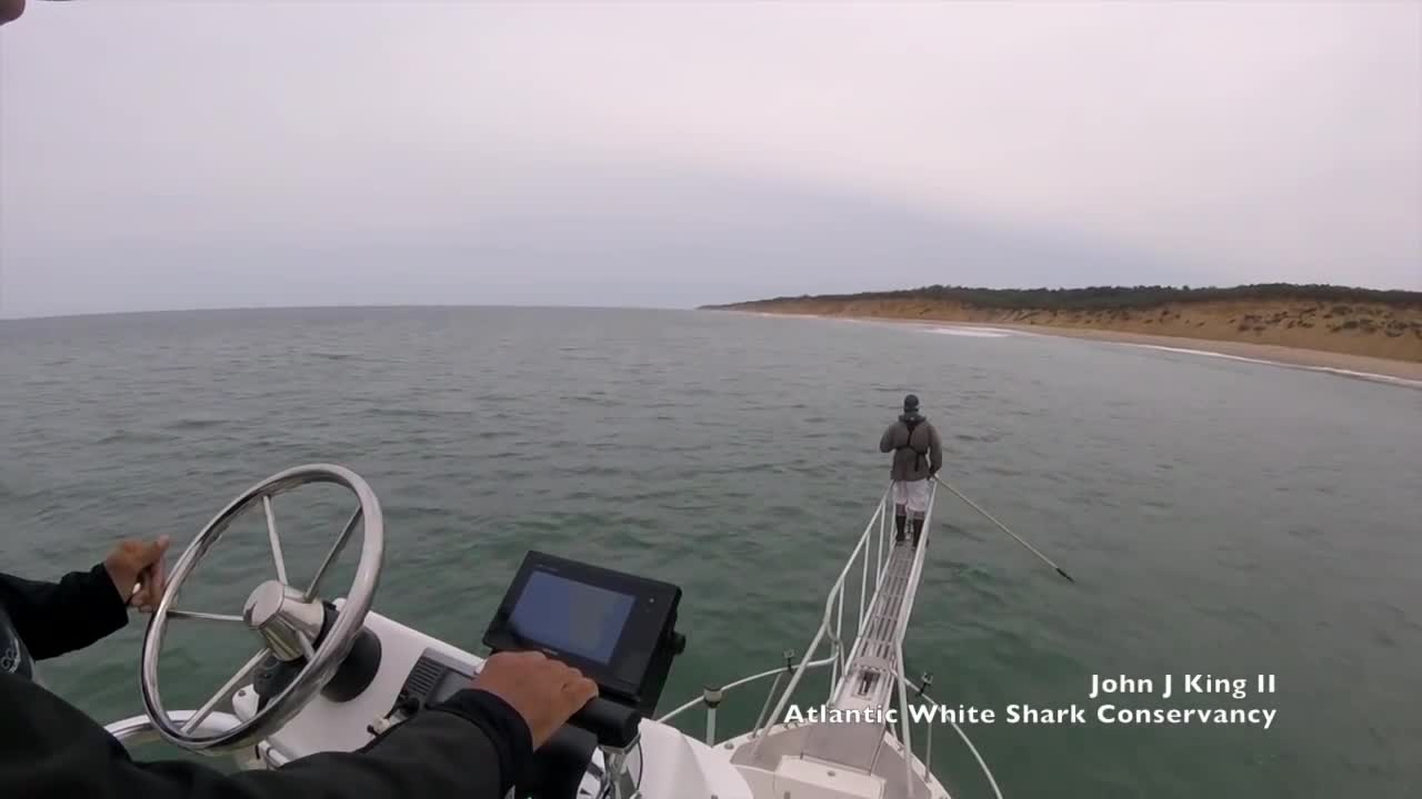 Cá mập nhảy lên mặt nước để tấn công nhà khoa học. Nguồn: