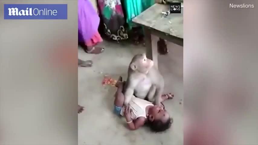 Video khỉ đột nhập vào nhà bắt cóc trẻ con. Nguồn: DailyMail