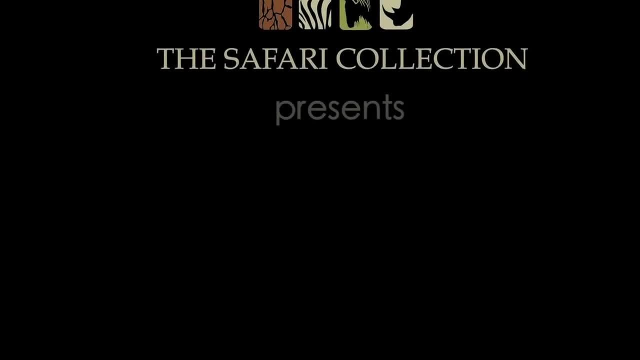 Linh dương đầu bò vùng lên, chống lại sư tử. Nguồn: Safari Collection