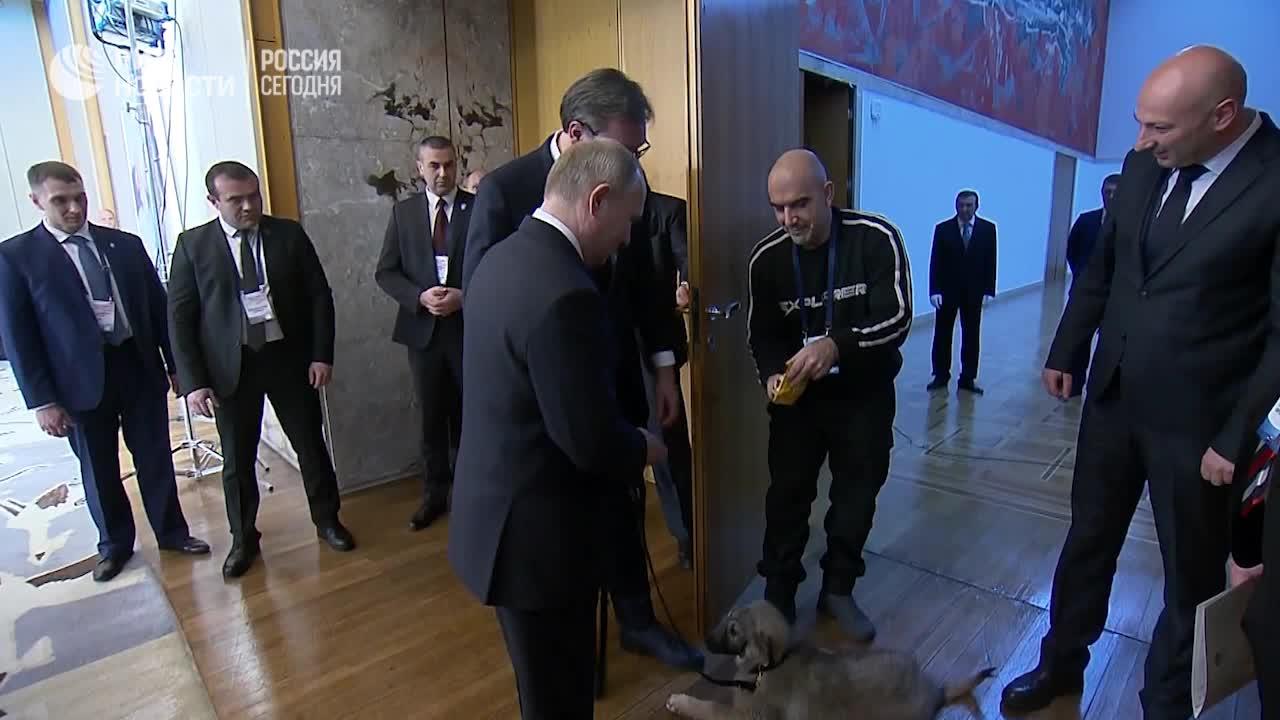 Tổng thống Putin gặp gỡ chú chó Pasha
