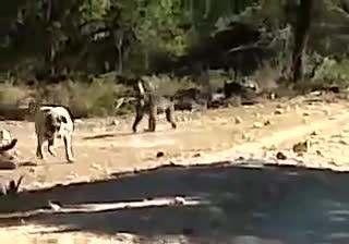 Chó giết chết khỉ đầu chó. Nguồn: BZ