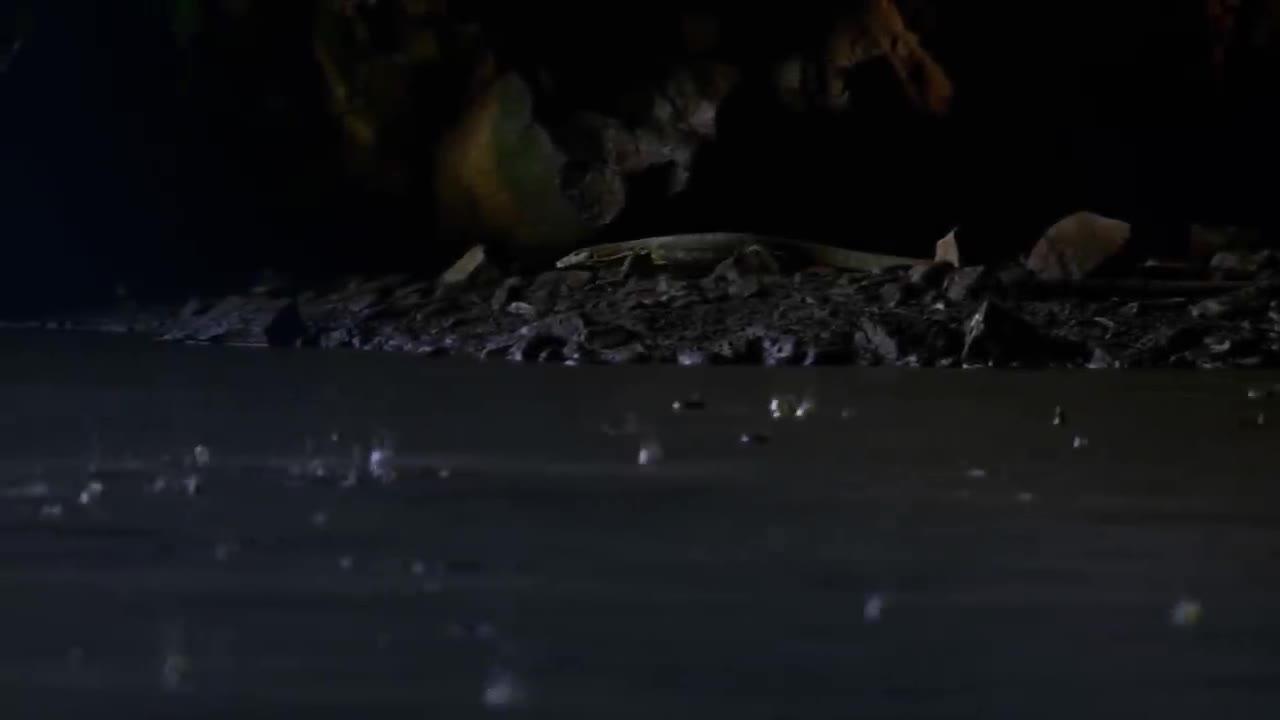 Cự đà bơi qua hồ nước để ăn thịt dơi. Nguồn: Nat Geo