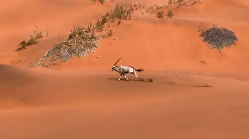 Gặp gỡ nhiều loài động vật nguy hiểm chết người.