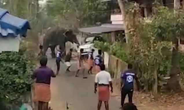 Video: Voi bất ngờ nổi loạn, lật tung ô tô.
