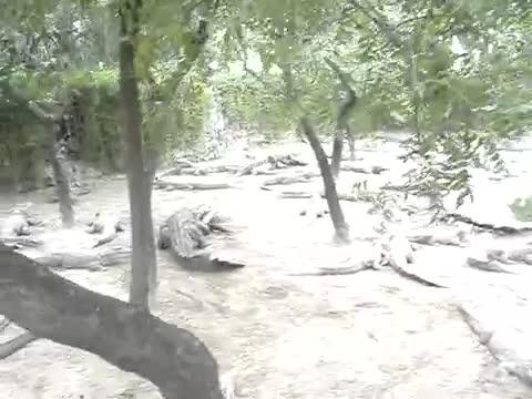 Cá sấu cố gắng ăn thịt đồng loại. Nguồn: Ramesh Kumar