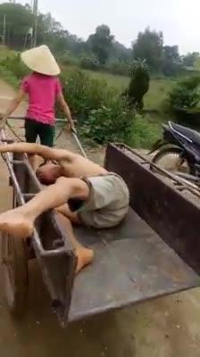 Người phụ nữ dùng xe bò, kéo chồng đang say khướt trở về nhà