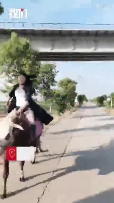 Video cô gái cưỡi bò gây sốt mạng xã hội Trung Quốc.