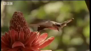 Rắn độc treo mình bắt chim. Nguồn: Youtube/BBC