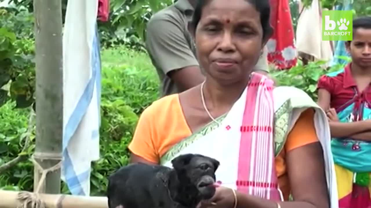 Dê 1 mắt như trong thần thoại ở Ấn Độ. Nguồn: Barcroft Animals