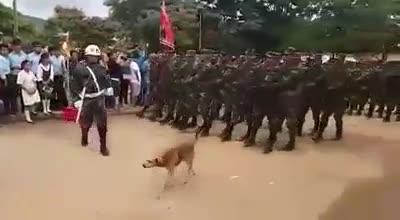 Video sự cố bất ngờ