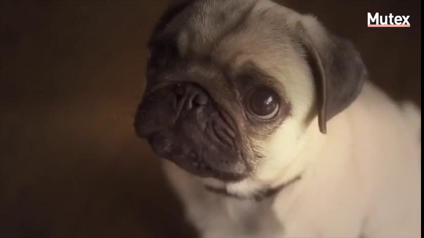 Nếu yêu chó, xin đừng bao giờ để chúng liếm mặt