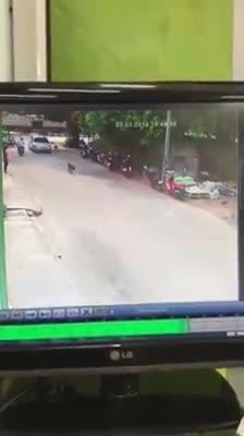 Chú chó bị ô tô chèn ngang người giữa đường