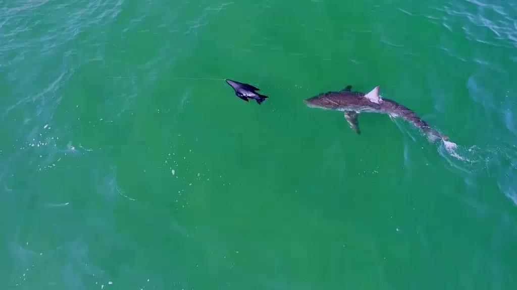 Cá mập vẫn là một bí ẩn với chúng ta