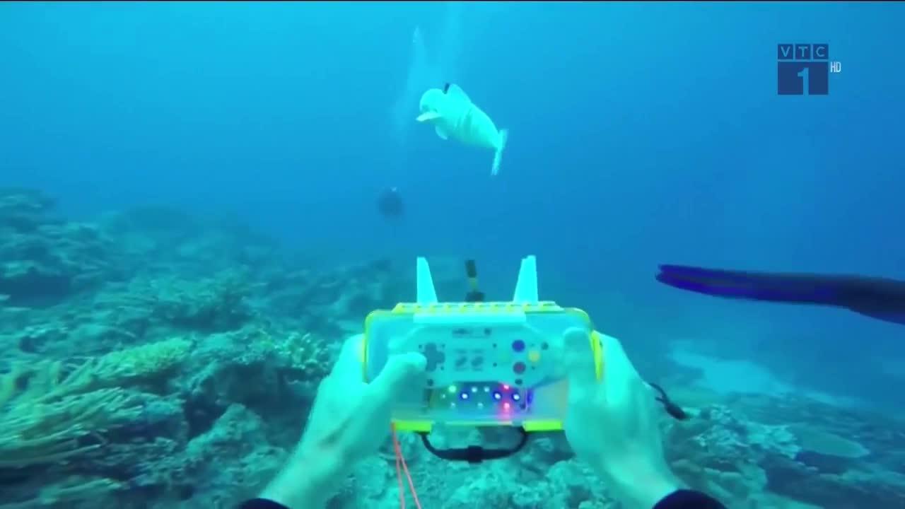 Robot cá sofi khám phá môi trường biển
