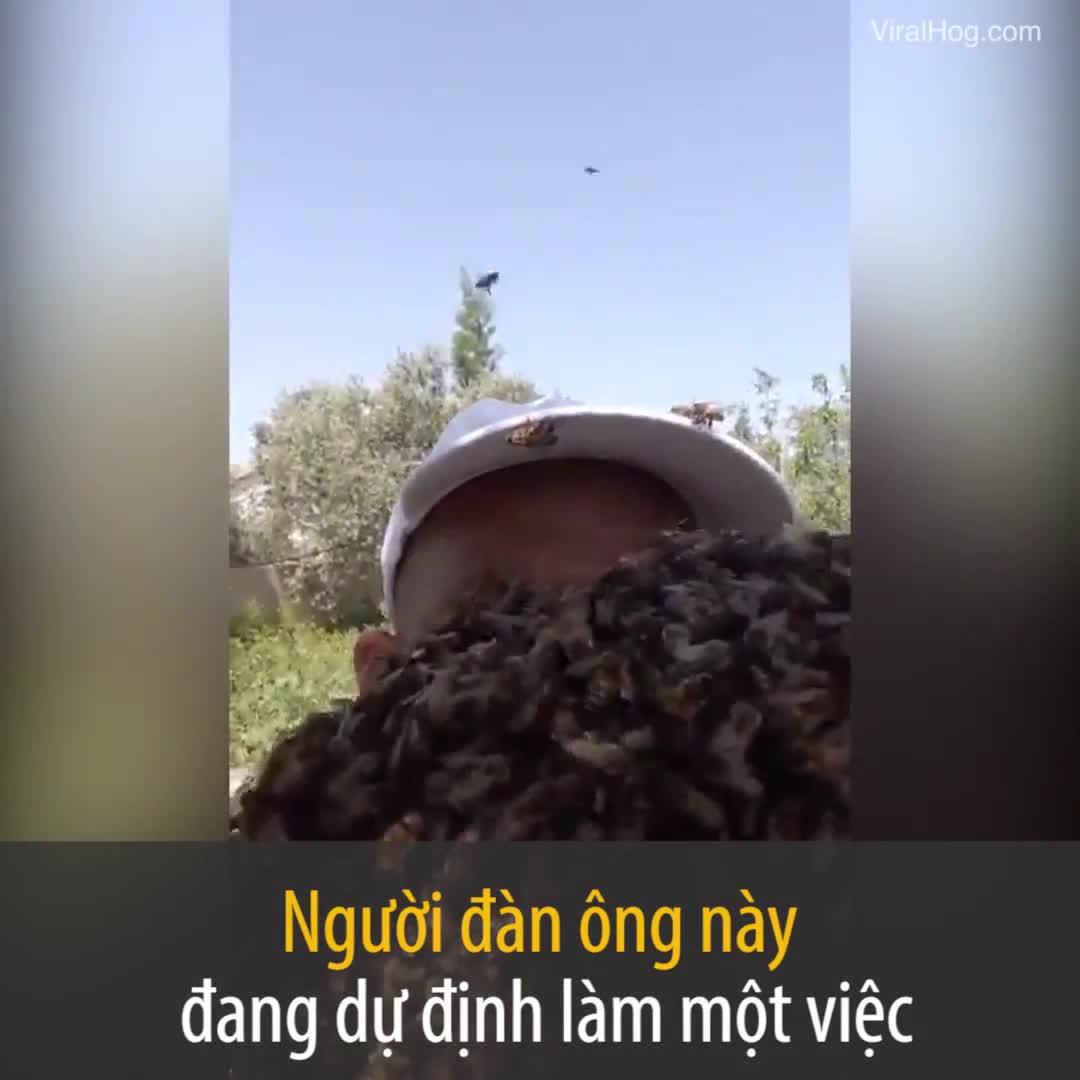 Người đàn ông để hàng ngàn con ong làm tổ trên đầu