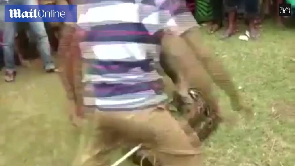 Tạo dáng chụp ảnh với trăn, người đàn ông suýt bị trăn siết chết
