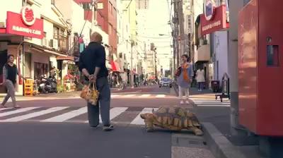 Đi bộ với rùa
