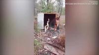 Video: Hai con trăn thảm kịch chiến tranh giành lãnh thổ