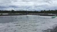 Hồ tôm xả thẳng nước thải ra biển, dân khẩn thiết cầu cứu