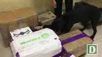 Xem chó nghiệp vụ tìm ma tuý ở sân bay Tân Sơn Nhất