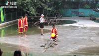 Chết cười sự cố hài hước khi đang chuẩn bị màn diễn mạo hiểm với cá sấu