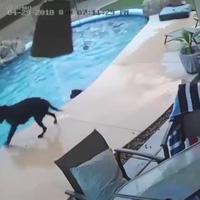 Ấn tượng khoảnh khắc động vật tốt bụng cứu sống lẫn nhau