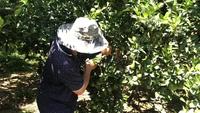 Nhờ tích luỹ được những kiến thức chăm sóc cây trồng tốt, nên vườn trái cây của anh Cường cho trái trĩu cành quanh năm