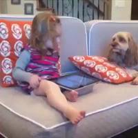 Chết cười với clip tổng hợp khoảnh khắc hài hước của những chú chó