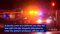 Du khách suýt mất mạng vì liều lĩnh đột nhập vườn thú sư tử trong đêm
