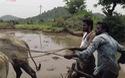 Điệu nhảy của hai chàng nông dân đi cày gây sốt