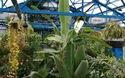 Cận cảnh bảo tàng côn trùng sống Philadelphia Insectarium và vườn triển lãm bướm Butterfly Pavilion.