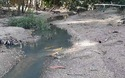 Bình Định: Nước thải bột mì làm cá chết: Do bò dẫm vỡ đường ống?