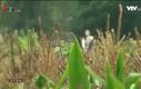 Phim truyện: Hoa cỏ may - Phần 3 - Tập 27