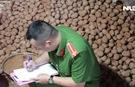 Bắt quả tang 1 cơ sở đấu trộn khoai tây Trung Quốc nhái Đà Lạt