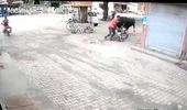 Tránh hai con bò đánh nhau, người đàn ông bị hất văng giữa đường