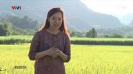 Hành trình di sản: Bí ẩn miền Tây xứ Thanh