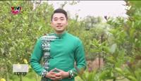 Nông nghiệp sạch: Phật Thủ sản phẩm nông nghiệp thành phố Hà Nội