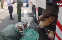 Bắt quả tang xe khách chở 12 con dê không đảm bảo vệ sinh