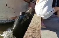 Clip: Sư tử biển bất ngờ lôi cô bé xuống biển!