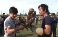 """Phóng sự: 70 đầu chim độc đáo tham gia cuộc thi """"Chim săn mồi"""""""