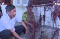 Tự bỏ tiền mua lại 2 con khỉ quý hiếm, giao nộp cho kiểm lâm