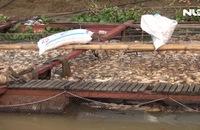 Hàng ngàn tấn cá chết trên sông La Ngà