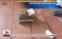 Tràn lan thiết bị đuổi chuột giả