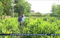 Làm rõ nguyên nhân gây tử vong 3 trẻ  trong một gia đình ở Hà Nội