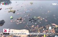 Ô nhiễm rác thải nhựa nghiêm trọng trên các tuyến kênh ở TP.HCM
