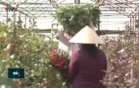Vi phạm bản quyền giống hoa: Vì sao khó ngăn chặn?